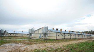 Строительство зданий для свинарников
